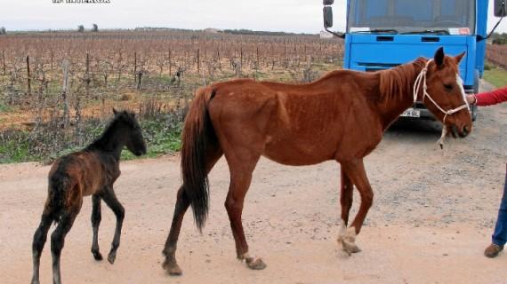 Localizados varios animales, abandonados y desnutridos en Chucena