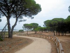 Parte del trazado del carril de 'La Ribera' de Punta Umbría. / Foto: Junta de Andalucía.