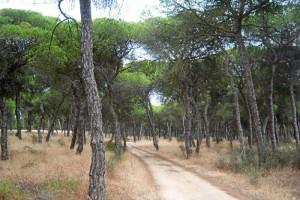 La provincia de Huelva cuenta con siete carriles para hacer cicloturismo. / Foto: Junta de Andalucía.