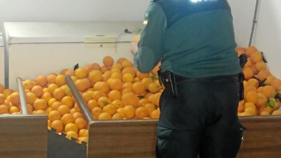 Recuperados 2.500 kilos de naranjas hurtadas de una finca en Lepe