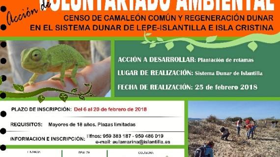 Abierto el plazo de inscripción para participar en una acción de voluntariado medioambiental en Islantilla