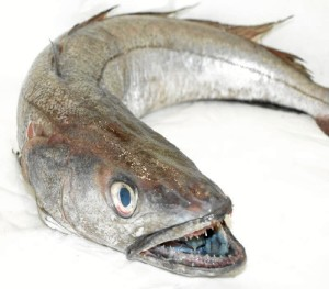 La merluza, pez de gran tradición onubense.