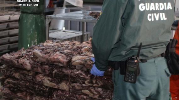 Intervenidos 5.733 kilos de pulpo sin etiquetar en Ayamonte