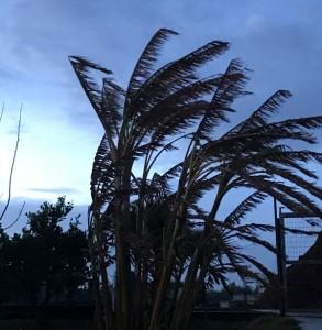 La tarde del domingo ha traído rachas intensas de viento a la provincia de Huelva.