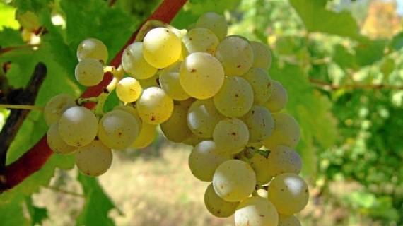 Los vinos onubenses seducen al mercado ruso