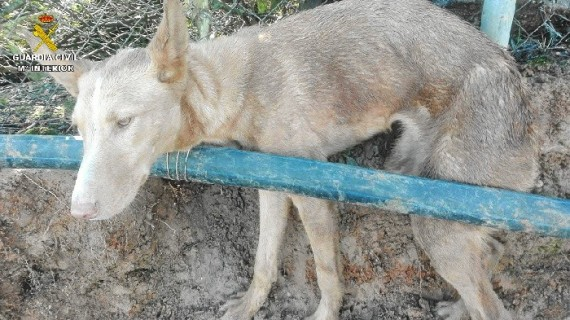 Localizada una finca en Punta Umbría donde se instalaban artes de caza prohibidas