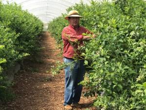 Francisco lleva desde los nueve años trabajando el campo.