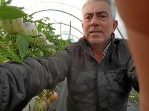 Alberto Garrocho, en la finca en la que está cultivando el pepino melón.