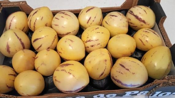 Palos se convierte en pionero en Europa en la producción y comercialización del pepino melón