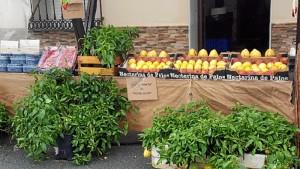 Por el momento, el pepino melón está teniendo muy buena acogida entre los consumidores.