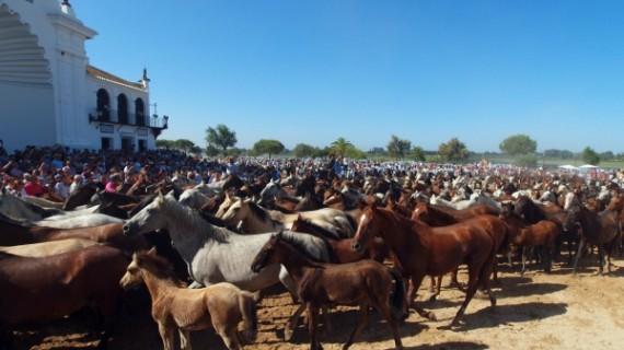Doñana Natural Life acogerá en su inauguración una recreación de la Saca de las Yeguas