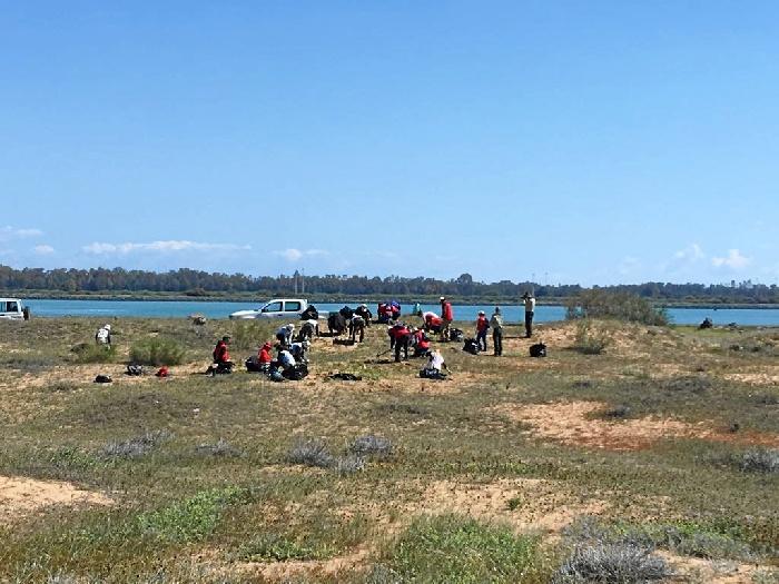 El Paraje Natural Marismas del Odiel ha llevado a cabo un control de la planta invasora onagra costera (oenothera drummondii) a través de un grupo de 40 voluntarios en el ámbito de la Reserva de la Biosfera.