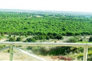 Mirador Doñana.