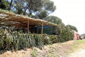 Los chozos, una construcción típica de la romería moguereña.