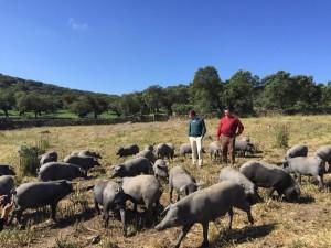 La periodista visitó una dehesa en la Sierra de Aracena.
