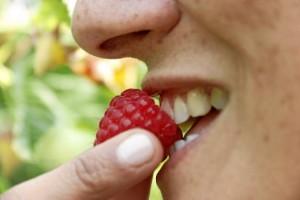 El compromiso de los frutos rojos se consideran poco calóricos por su bajo contenido en azúcar y son aptos para todos los públicos.
