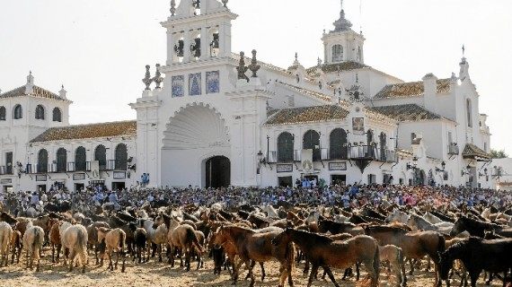 Unos 1.000 equinos en estado semisalvaje participan en la Saca de las Yeguas del Rocío a Almonte