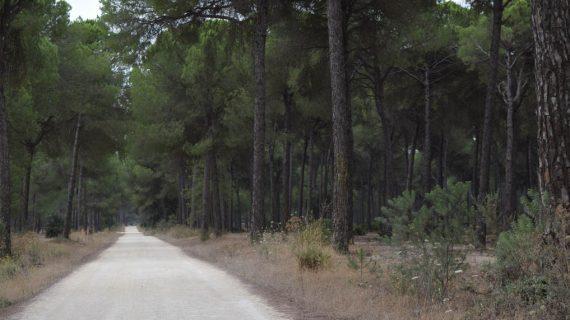 Hinojos acoge la I Ruta Nocturna de Iberlince