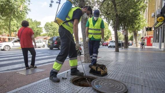 Desarrollan una campaña de desratización y desinsectación en todos los barrios de Huelva