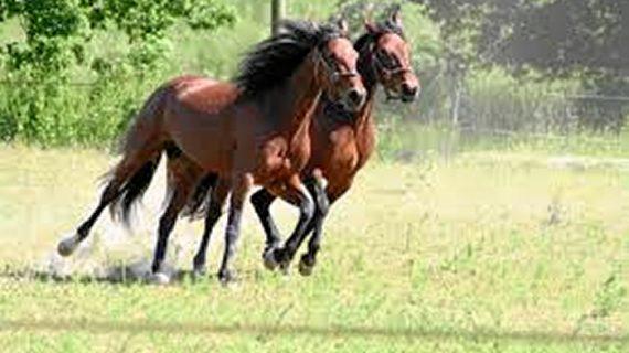 5 consejos prácticos para cuidar a tu caballo este verano