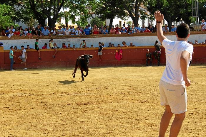 Trigueros pone el broche de oro al verano onubense con sus tradicionales Capeas, unos festejos con historia