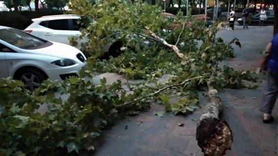 La caída de una rama en la acera de la Avenida de Andalucía de Huelva queda en un susto