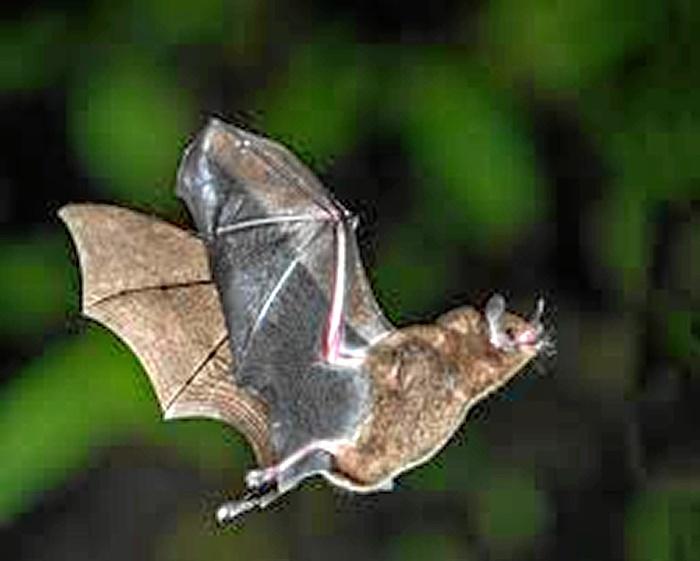 En perfecto estado el joven onubense mordido por un murciélago portador de la rabia