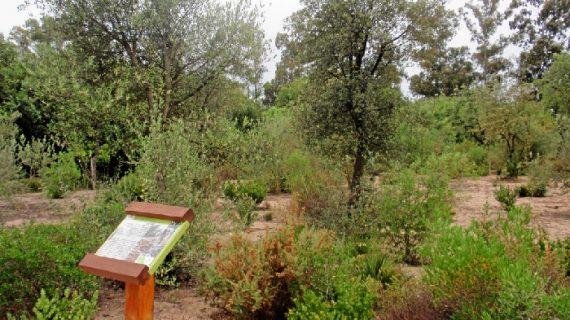 El Jardín Botánico Dunas del Odiel acoge un cuentacuentos este sábado con motivo del Día Mundial de las Aves