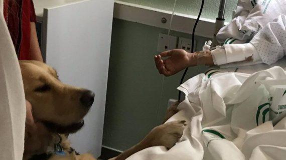 Los niños hospitalizados en el Juan Ramón Jiménez reciben una visita muy especial: el perrito Lenny