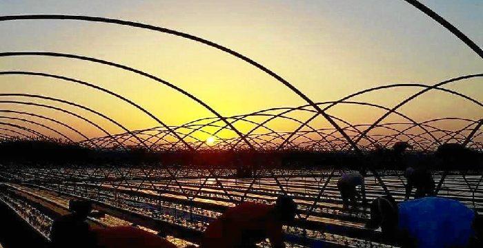 Asaja pide una solución a la falta de respuesta a las ofertas de trabajo para la recogida de frutos rojos
