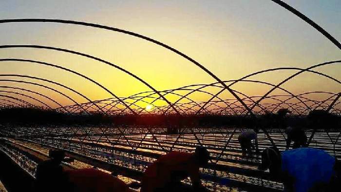 Las autoridades marroquíes avalan las buenas prácticas que desarrolla el sector de la fresa y los frutos rojos de Huelva