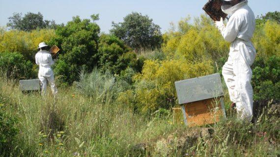 Un total de 132 apicultores onubenses recibirán ayudas para el mantenimiento de sus colmenas