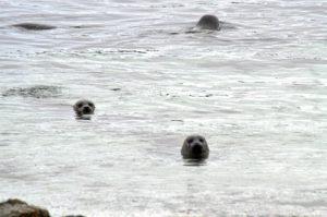 Sus aguas están habitadas por una extensa población de focas.