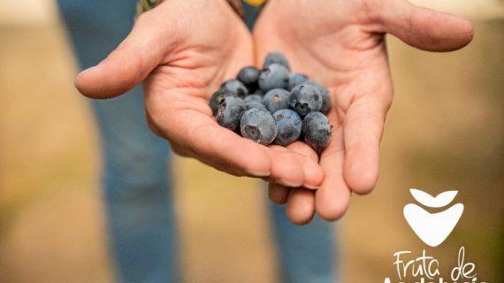 Fruta de Andalucía aprovechará Fruit Attraction para incidir en la importancia de los arándanos en la nutrición