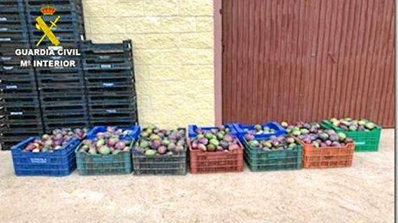 Detenidas tres personas tras ser sorprendidas robando mangos en Isla Cristina