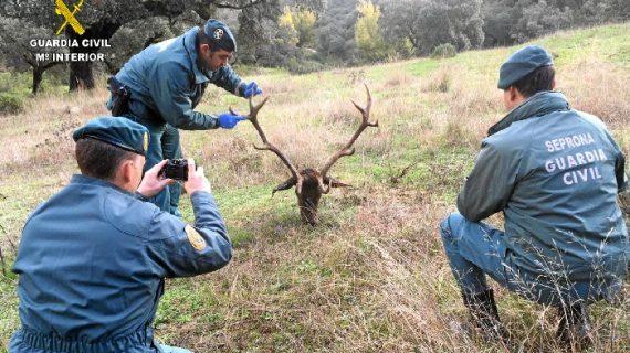 Relacionada una persona con un delito de caza furtiva en la localidad de Aracena