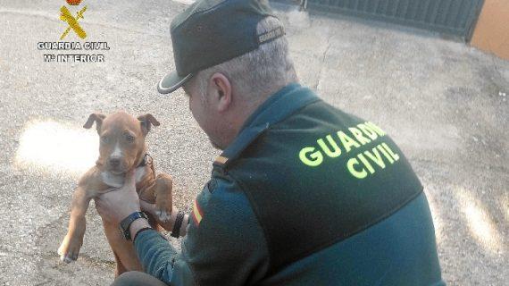 Rescatado un cachorro que había sido sustraído en un huerto de Riotinto