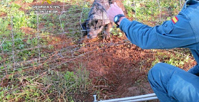 Liberada una perra que había quedado atrapada en una finca de Niebla