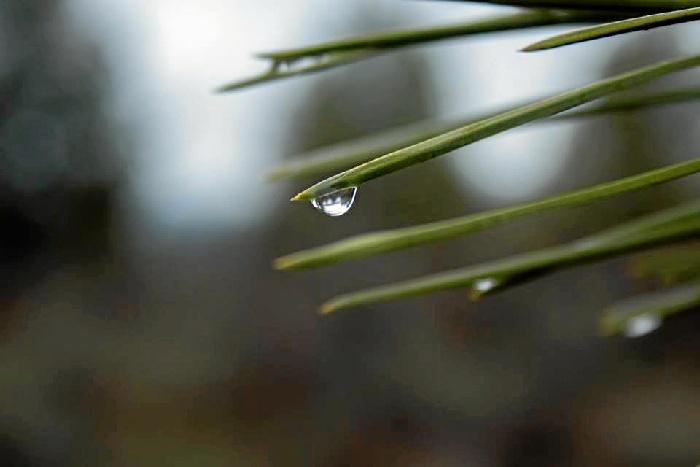 La Comunidad de Regantes del Condado liderará el trasvase de aguas superficiales para Almonte, Rociana, Bonares y Lucena
