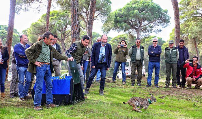 Moreno aboga por la protección de lince ibérico en su visita a Doñana