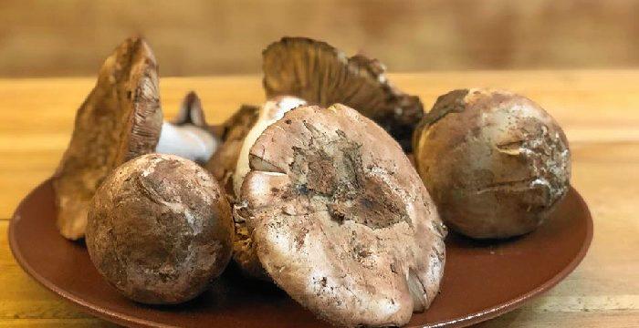 El gurumelo, una joya gastronómica del Andévalo