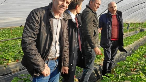 Productores de fresa de Francia, Italia y España analizan el desarrollo de la campaña