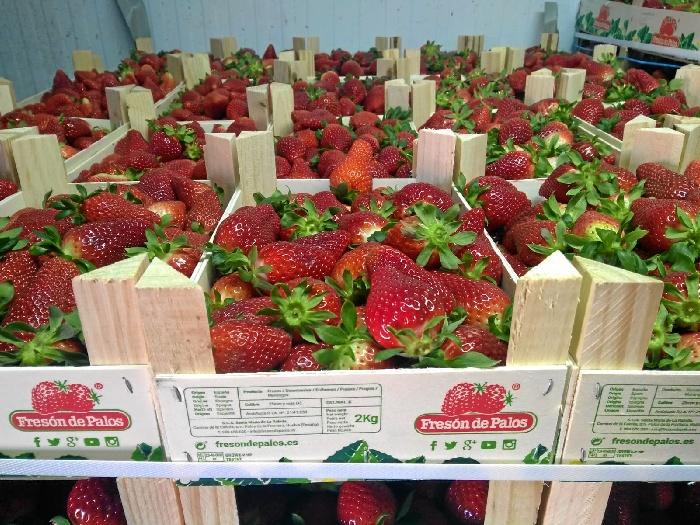 El Banco de Alimentos de Huelva recibe una donación de 15.200 kilos de fresa