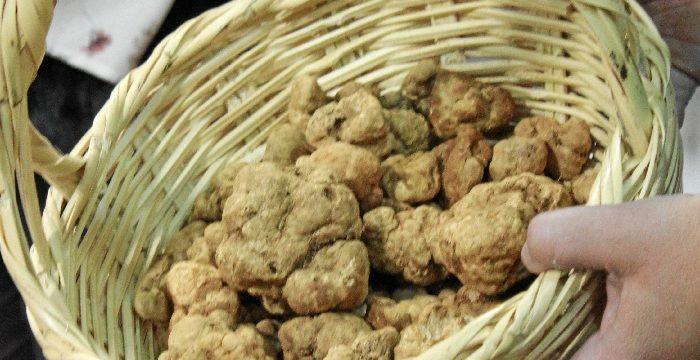 La turma o trufa blanca, un producto gourmet que crece en tierras andevaleñas