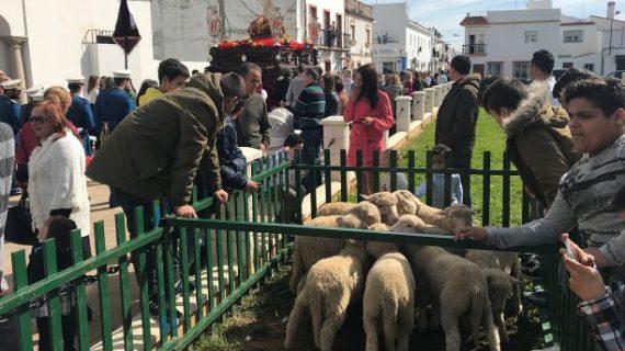 La tradicional Rifa de los Borregos de San Juan del Puerto se celebra el próximo domingo