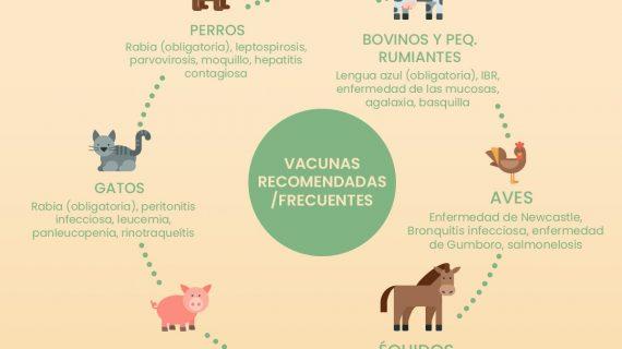 ¿Conoces la importancia del papel que tienen los veterinarios en nuestra vida diaria?