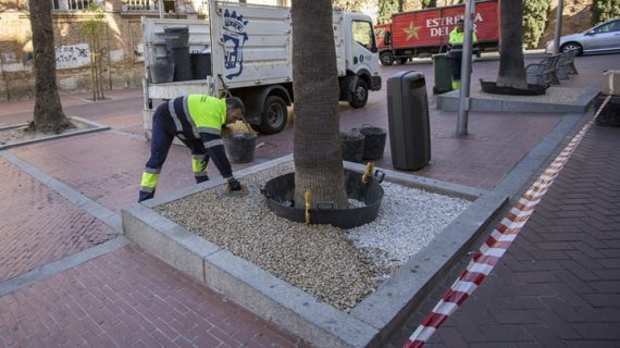 Arreglo de los alcorques de palmeras y naranjos del Paseo Santa Fe por seguridad y estética