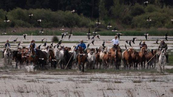 La III Feria Doñana Natural Life sitúa a El Rocío a la vanguardia del ecoturismo nacional