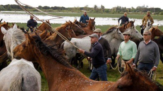 La Feria Doñana Natural Life apuesta por ampliar la zona expositiva para ser una cita clave del ecoturismo en Europa