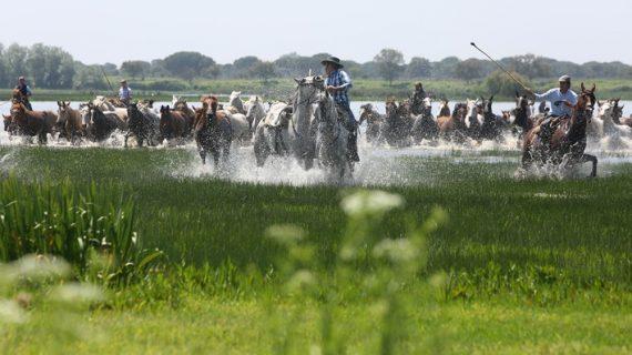La III edición de Doñana Natural Life arrancará con una recreación de la Saca de las Yeguas